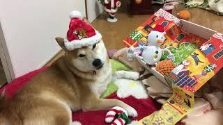 昨日はクリスマスイブでお休みにも関わらず、沢山の方に遊びに 来て頂いて、本当に有難う御座いました♪ 次回は~~~・・・モチロン...