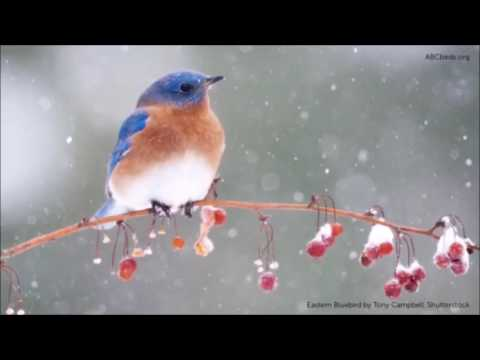 Jimmy Dewar... Bluebird....
