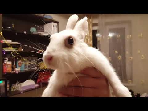 Злой  кролик может укусить. Содержание и разведение кроликов. Веселые кролики. Дачная Жизнь ТВ.