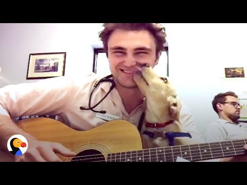 Vet Sings to Calm Pet Patients Down | The Dodo