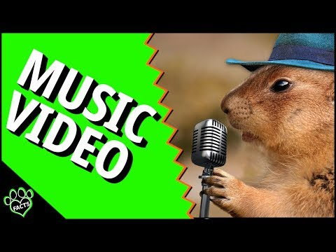 Animal Facts Music Video