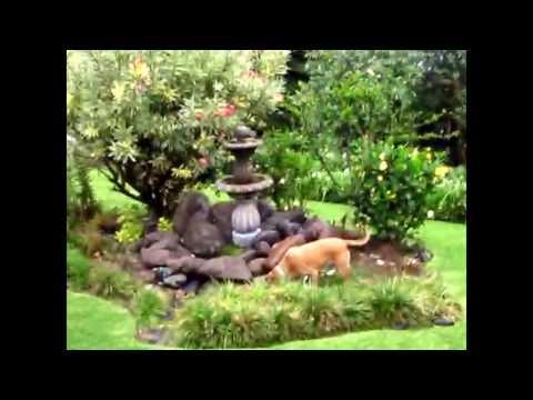 Home Garden in Jocotepec, Lake Chapala, Mexico