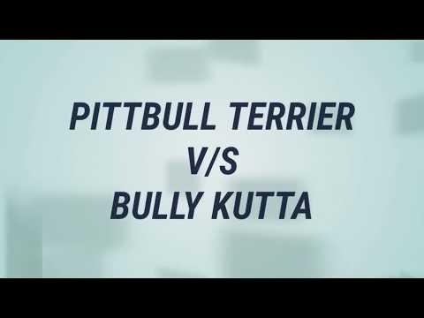 pitbull dog vs bull kutta in hindi