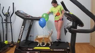 Обучение котов занятиям на беговой дорожке