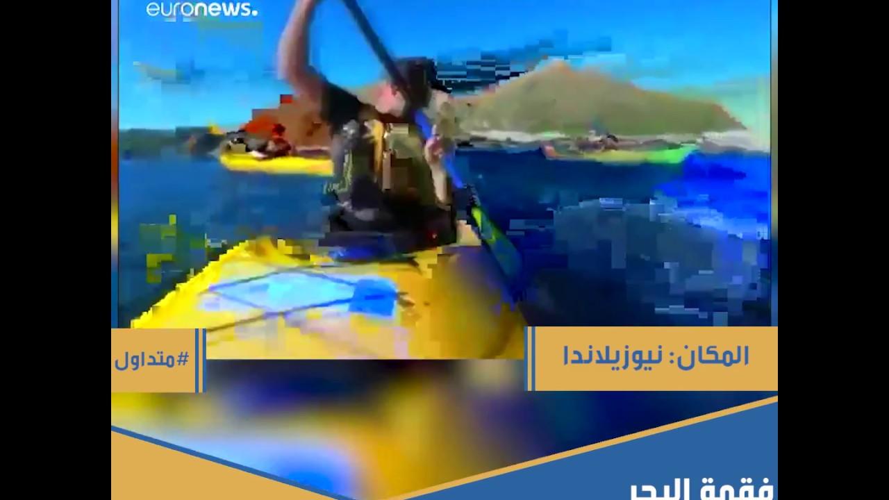فقمة البحر تهدي أخطبوطا لإحدى القوارب