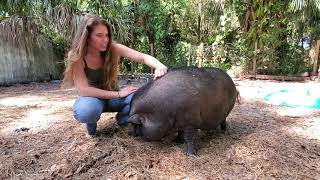 Piglet Introductions Part I