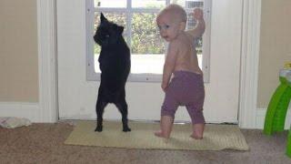 Животные и дети(Видеонарезка различных приколов с участием животных и детей... вместе :) http://www.zoopicture.ru - Сайт канала http://facebook..., 2012-07-10T06:33:41.000Z)
