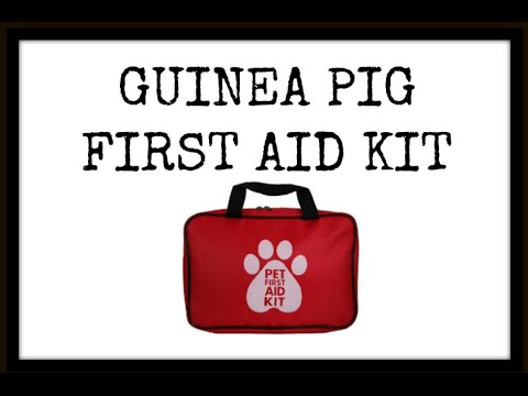 Guinea Pig FIRST AID KIT | JUNE 2016