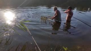 сазан 12 кг,рыбалка на Северском Донце июнь 2016