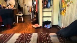 Жесть домовой выключил камеру О_о(Решил перед уходом поставить камеру и заснять, что собака делает дома, пока нас нет. Вот результат... #supernatural..., 2016-01-17T00:02:12.000Z)