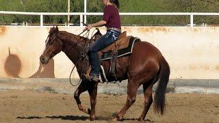ATM Rey - finshed cutter - WON $$$ NCHA penning sorting barrels-heel horse-reined cowhorse handle