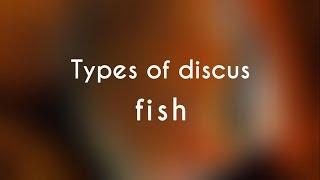 Types of Discus Fish