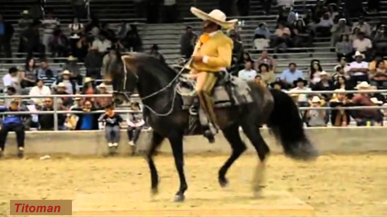 Corridos De Caballos - Antonio Aguilar - YouTube dcbb1830fed