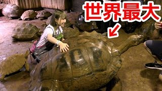 130 years old! The world's largest tortoise