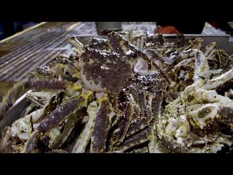 Péril en haute mer - Une pêche à 250 millions de dollars ! - Discovery France