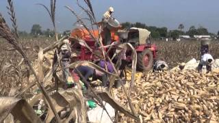 MAIZE CUTTING MACHINE- Harvesting Maize-CROP CUTTING