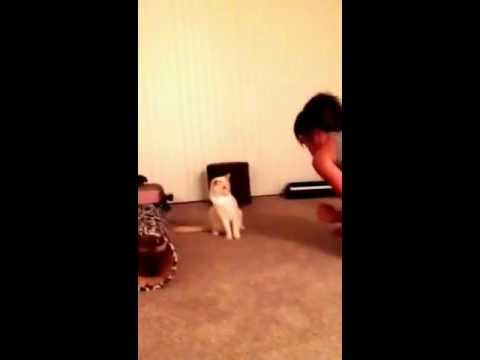 They say cats can't be trainedKaynak: YouTube · Süre: 8 saniye
