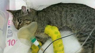 Общее спасение кошки в Киеве, которую скинули с 7 этажа