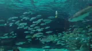 Sharks, fish, an eel, and a sea turtle at Ripley's Aquarium - Myrtle Beach, South Carolina