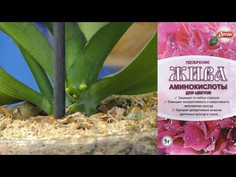 Корни орхидей РАСТУТ! БЫСТРО, РЕЗКО, ОДНОМОМЕНТНО! Не ожидала такого эффекта.