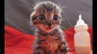 Si te gustan los gatos este video puede dejarte mal