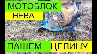 Мотоблок НЕВА пашем ЦЕЛИНУ ФРЕЗОЙ.