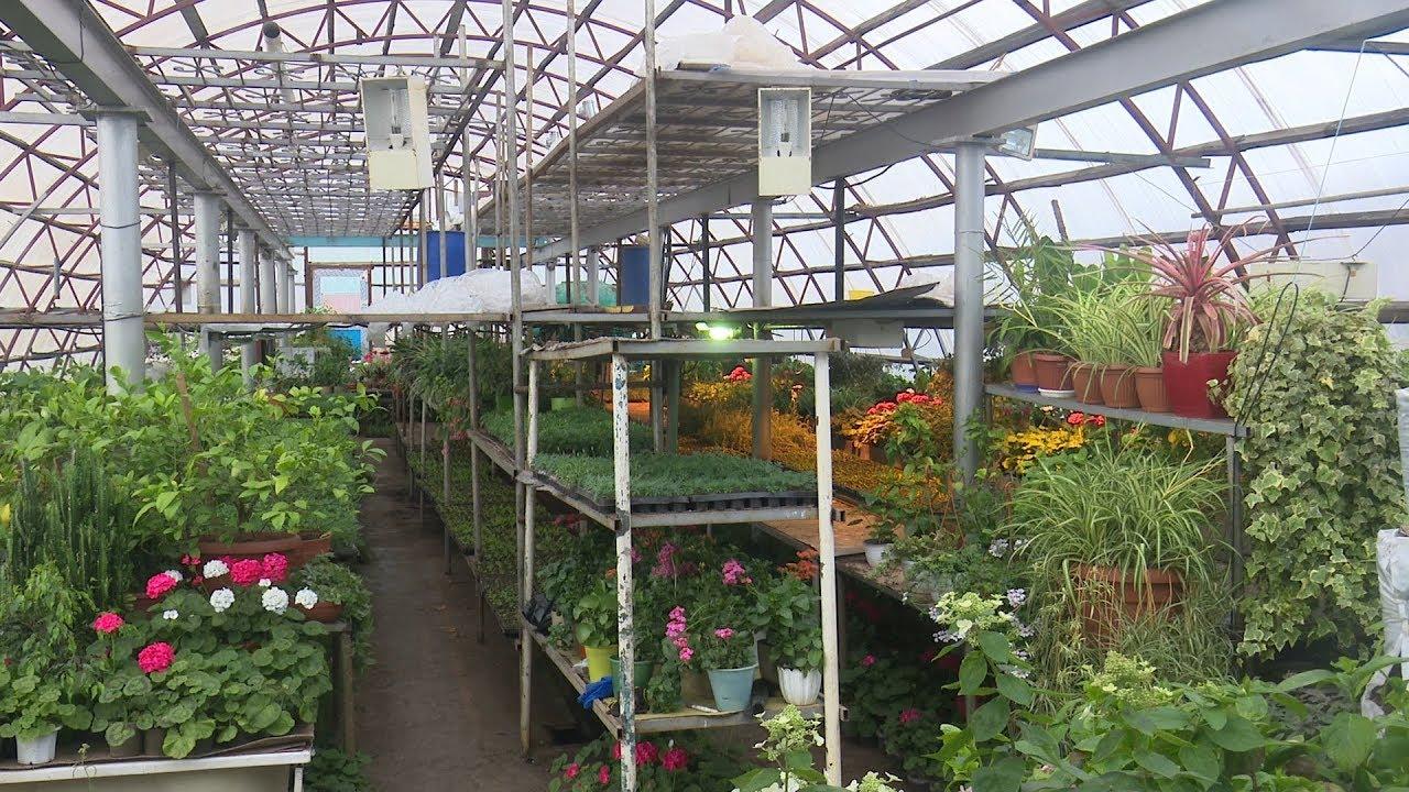 Купить цветы в арамиле, заказ доставкой
