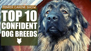 The Worlds MOST CONFIDENT Dog Breeds. Top 10