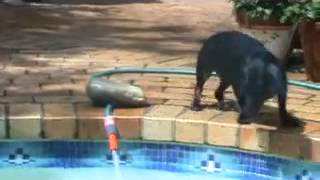 Funny Dog Video   Dachshund Vs Garden Hose
