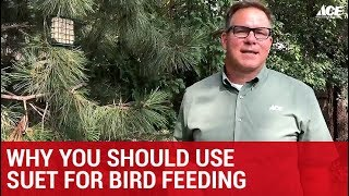 Why You Should Use Suet For Bird Feeding  - Ace Hardware