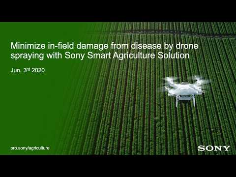 Minimize In Field Damage From Disease By Drone Spraying With Sony Smart Agriculture Solution