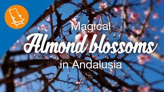 The magic of the almond blossom in Spain