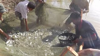 Must see!!! fake nest trap traps a lot of fish !