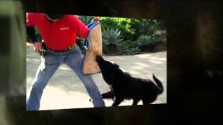 Service Dog Training Rancho Bernardo Ca Dog Training