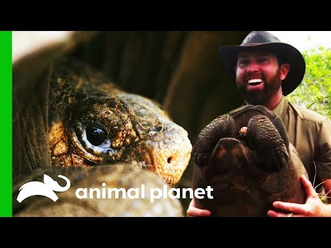 'The Greatest Galapagos Discovery In Over 100 Years!' | Extinct or Alive?