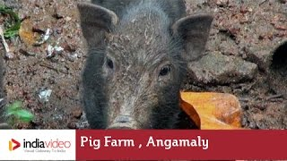 Pig Farm, Angamaly | India Video