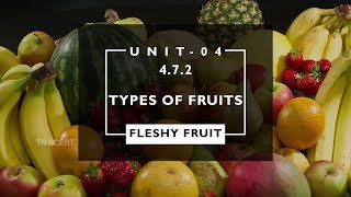 Botany Video Lesson - Types of FRUITS 4.7.2 English