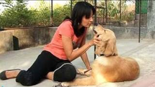 Video Seema re-visits the Pet sitters in Pune download MP3, 3GP, MP4, WEBM, AVI, FLV September 2017