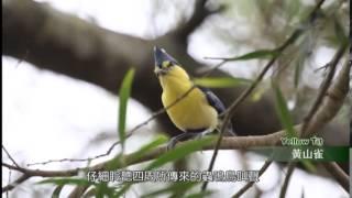 森濤之美 藤枝國家森林遊樂區 精華版 國語