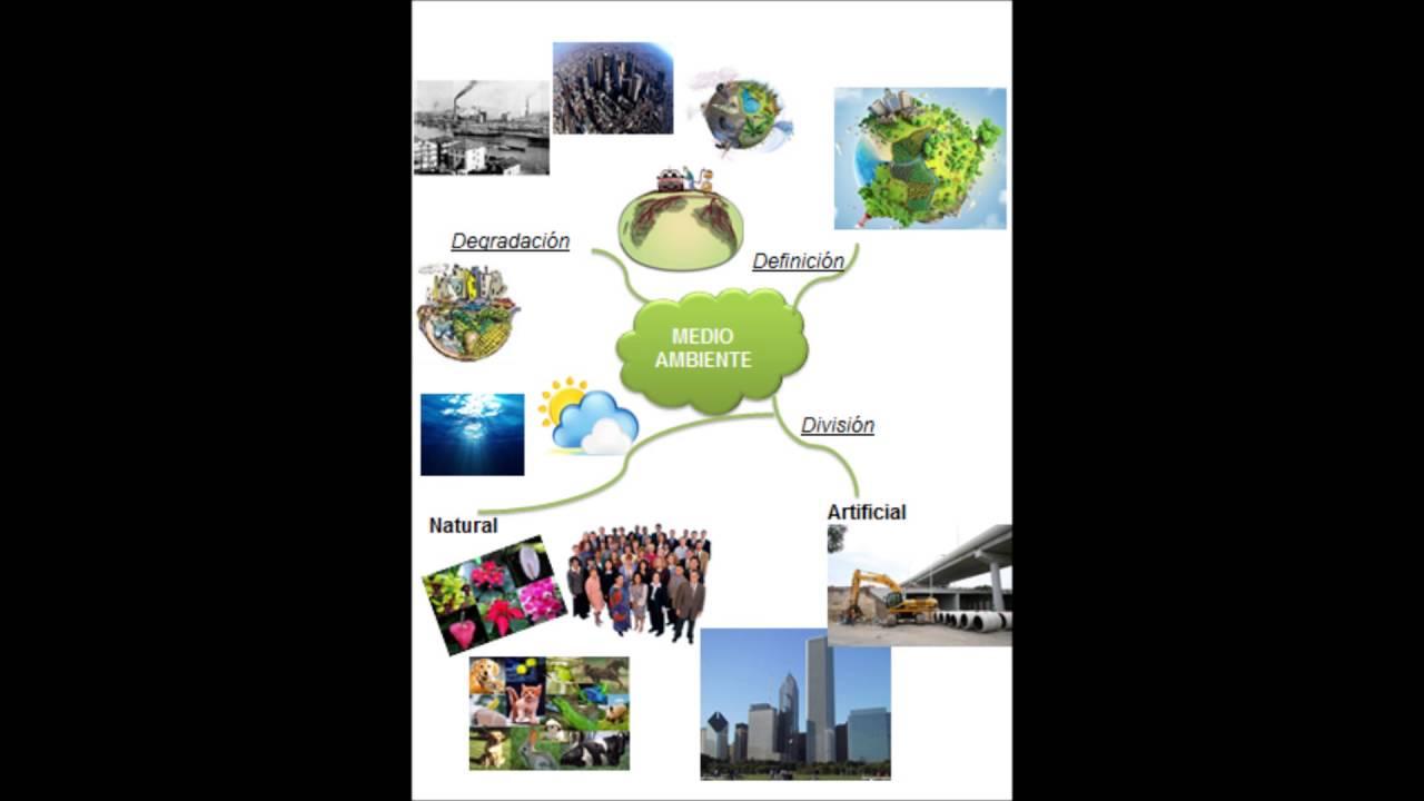 Medio Ambiente Definicion