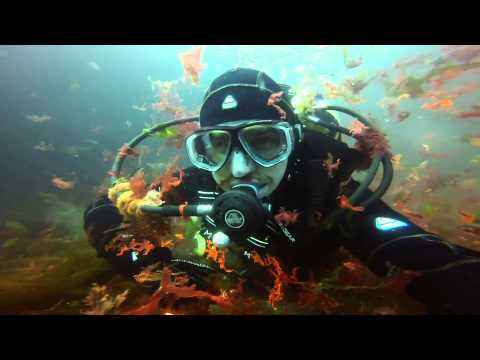 Our Scuba Trips | Dive site 101 Ireland 2014