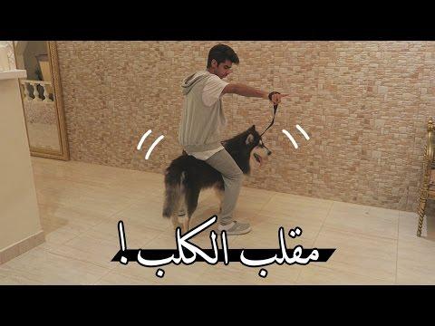����� ���� ����� ! : ��� ����� ����� ��� �ǿ | DOG PRANK