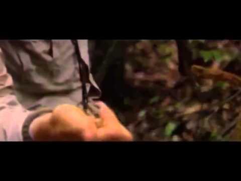 Bear Grylls Man vs Wild S03E08 Dominican Republic Mission Survive