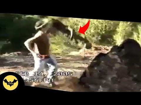 5 Attaques De Monstres Capturés En Vidéo.