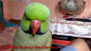 funny parrot talking videos