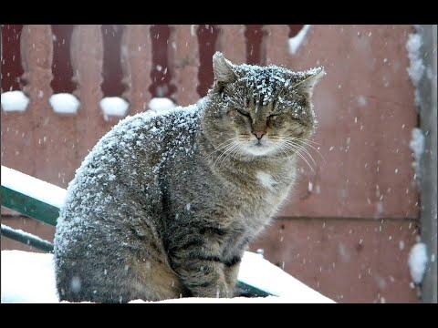 Вопрос: Почему кошки и коты благосклонны не ко всем людям?