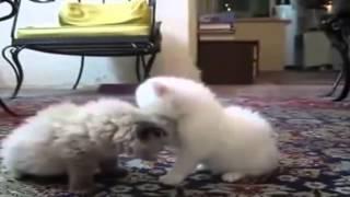 Смешные котята!  Funny cats, Прикольные, ржачные, веселые коты, кошки, котята