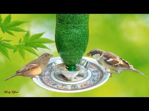 how-to-make-diy-birdfeeder-from-plastic-bottle