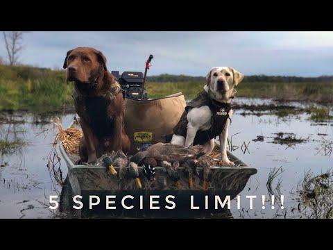 Michigan Duck Hunting Opener!! - Public Land