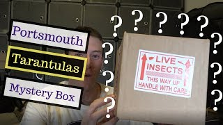 Portsmouth Tarantulas Review - £50 Mystery Box!